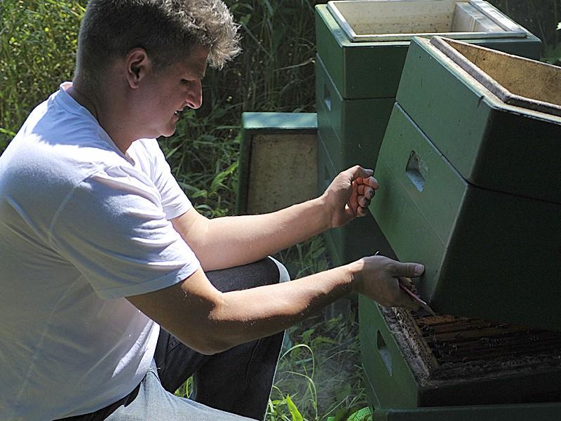Bienen Königinnen Zucht Kurs Fortgeschrittene Imker