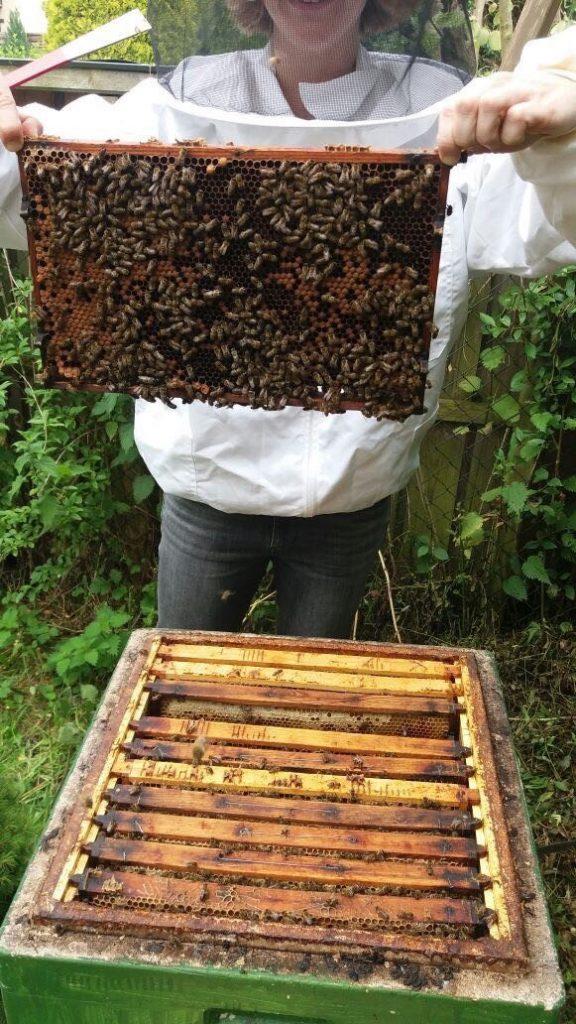 praktische Arbeitsübungen für angehende Imker an den Bienen bei den Völkern im Bienenkurs in Hannover
